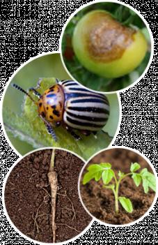 Gestion des insectes ravageurs