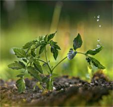 solution naturelle croissance légume